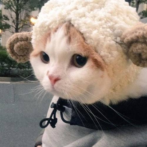 wongathan's avatar