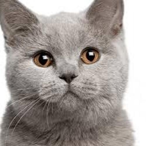 Startled Cat's avatar