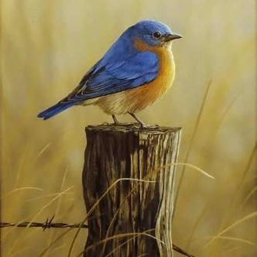 REPOST BIRD's avatar