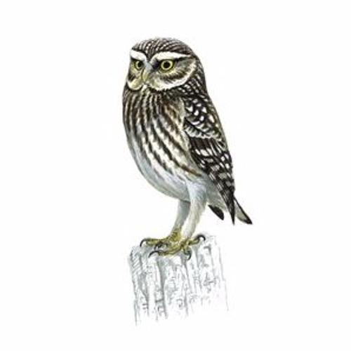 Little Owl Recordings's avatar