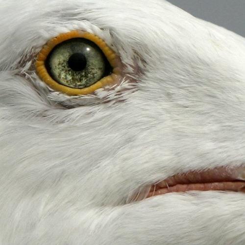 fridim's avatar