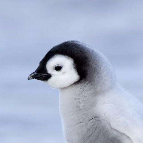 Galaxy Penguin's avatar