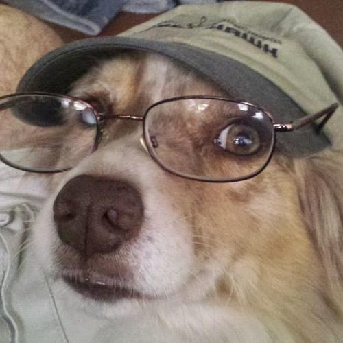 woodytwoshoes's avatar