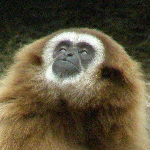 krojc's avatar