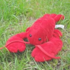 star_lobster