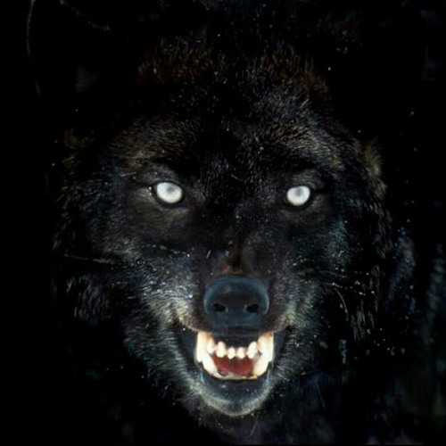 black wolf s stream on soundcloud hear the world s sounds black wolf s stream on soundcloud