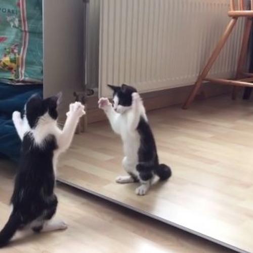kittykennie's avatar