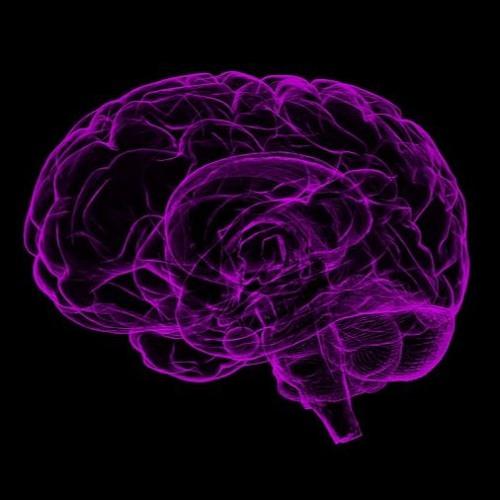 Forensic Neuropsychology Expert's avatar