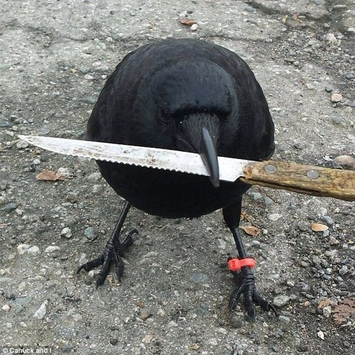 Crow Harassment's avatar