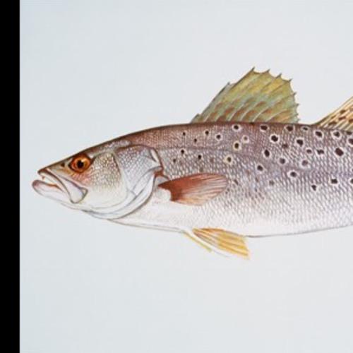 Saltfisher 14's avatar