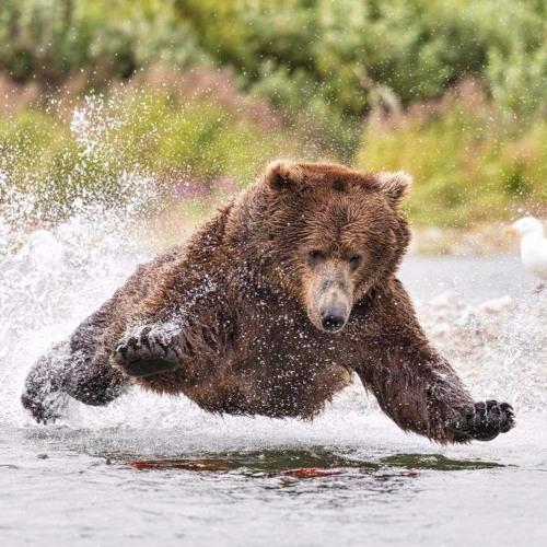 BearForceOne's avatar