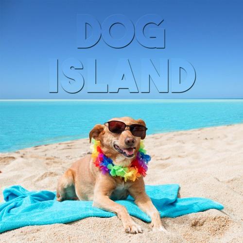 Dog Island's avatar