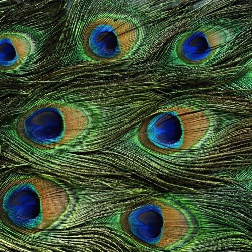 The Birds of Prey's avatar
