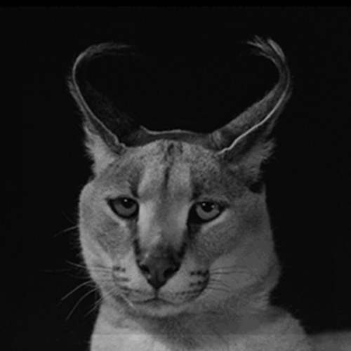 Black Caracals's avatar