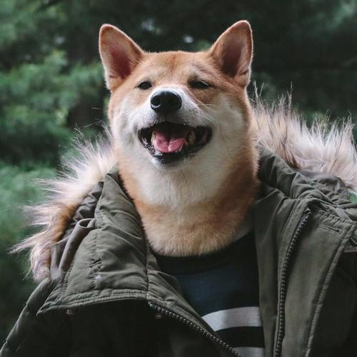 Solomon Gumball's avatar