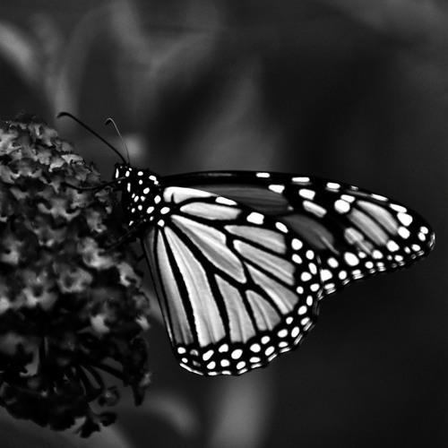 mariposa's avatar