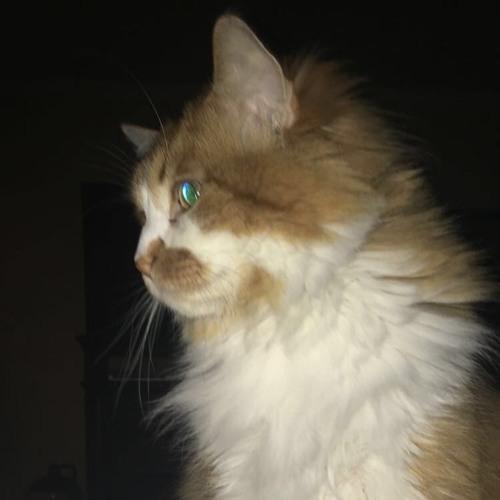 haileyflemons's avatar