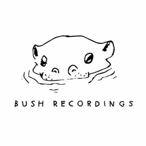 Bush Recordings's avatar
