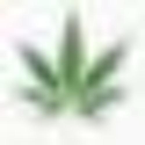 g$'s avatar