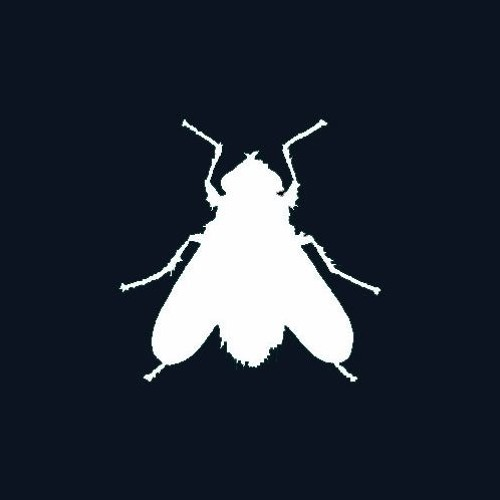 flies+flies's avatar