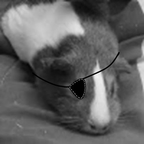 Dannver Devita's avatar