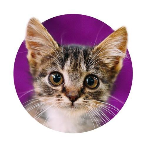 catfair's avatar