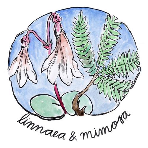 linnaea et mimosa's avatar