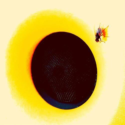 si muir's avatar