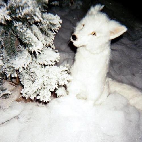 Inu Inu's avatar