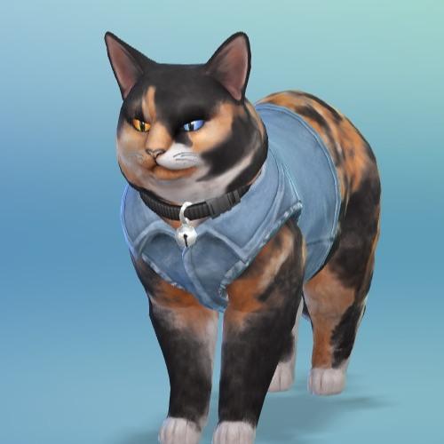 Ash Escott's avatar