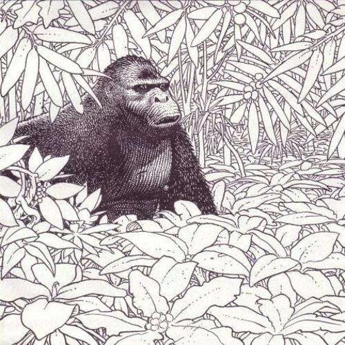 kikimara's avatar