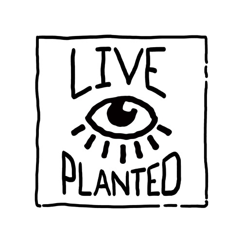 Live Planted- Practical Vegan Living's avatar