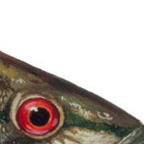 fish like sharks's avatar