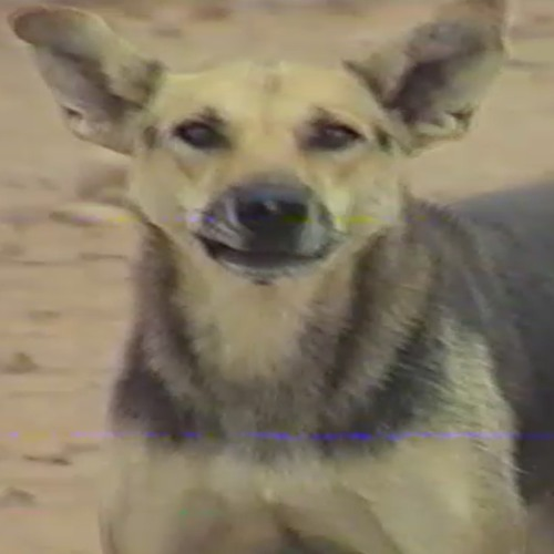 TIERS-MOND1's avatar