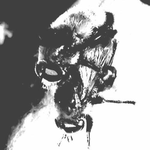 suhalia's avatar