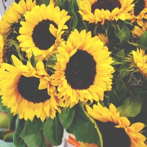 SunflowerSky's avatar