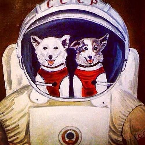 The Extended Soviet Space Dog Project's avatar