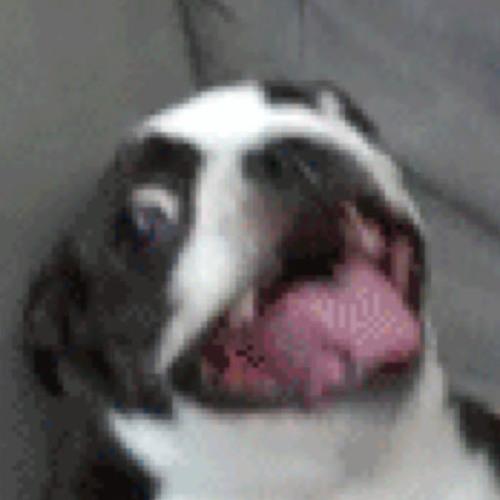 OdinXFH Chickens's avatar