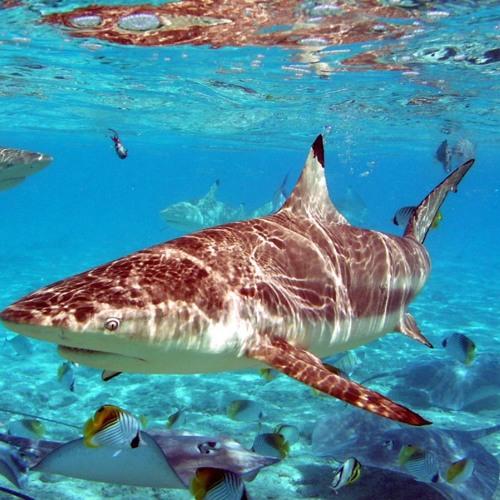 shark N Ocean's avatar