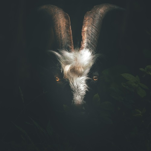 goat's avatar