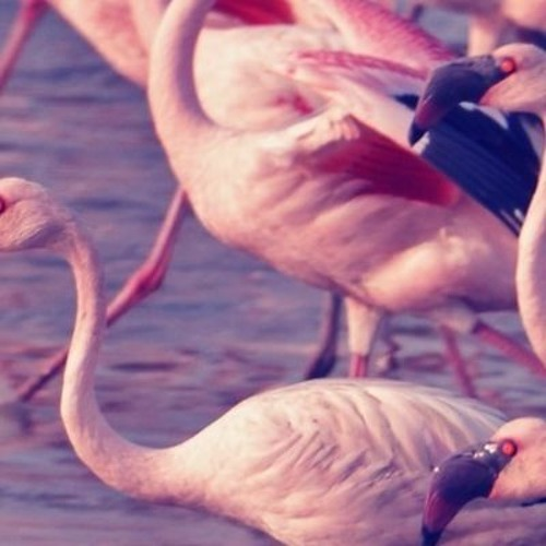 Pink Flamingo's avatar