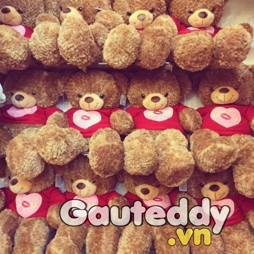Gau Teddy's avatar