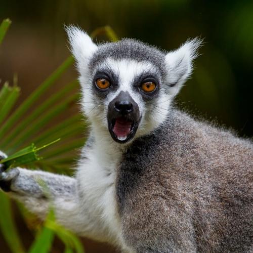 Moody Lemur's avatar