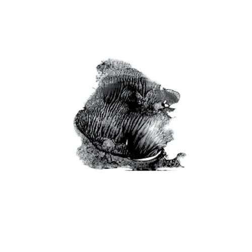 Itsuki Doi's avatar