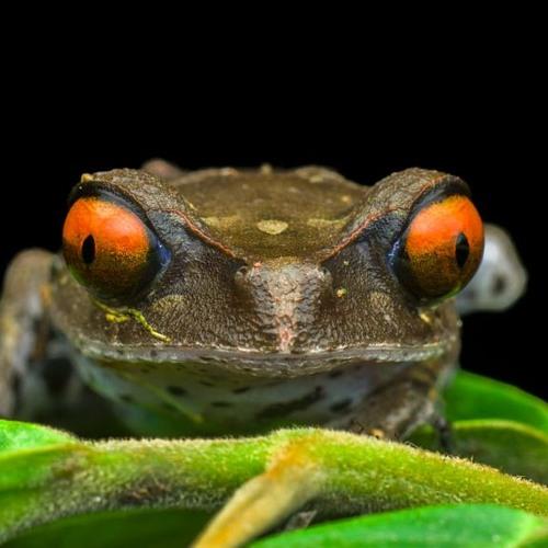 froschfressah's avatar