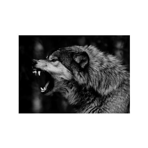 UMET ΛLE ( White Wolf )'s avatar