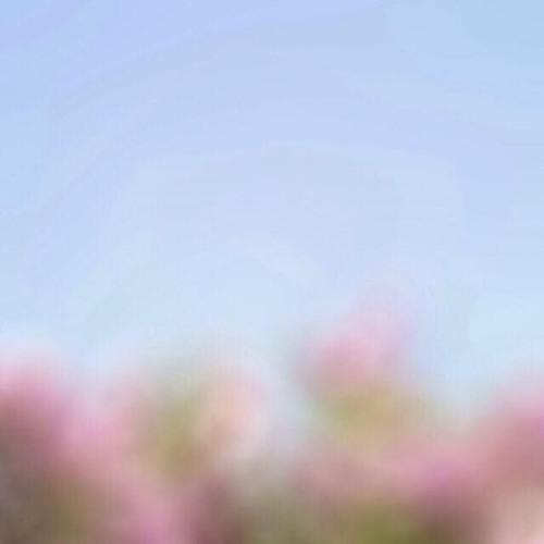 ANGEL DIARY's avatar