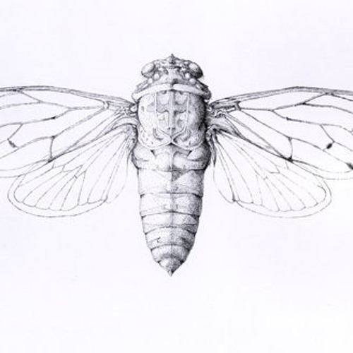 cicada's avatar