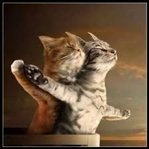 The LoveCats's avatar