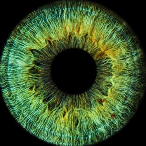 eyerror's avatar